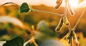 ISU is developing big-data models of soybean SDS with agmatix